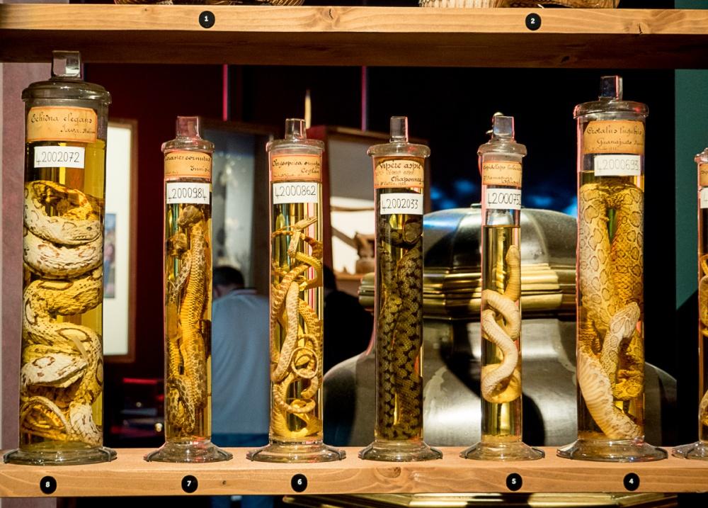 Exposition Venenum, Un monde enpoisonné, Musée des Confluences, Lyon
